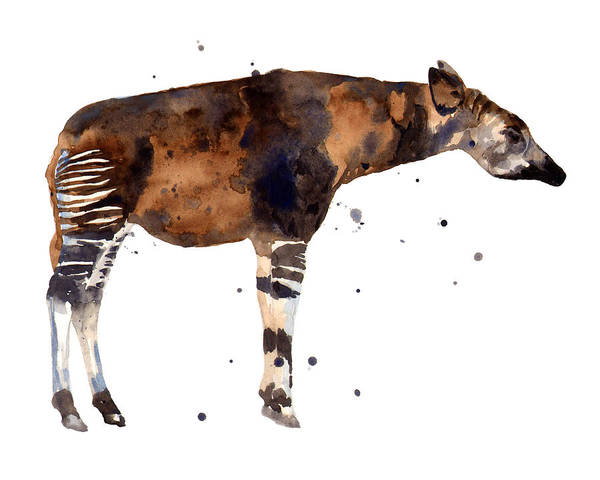 Wall Art - Painting - Okapi Painting by Alison Fennell