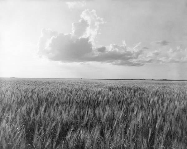 Wall Art - Photograph - Oklahoma Wheat, 1937 by Granger