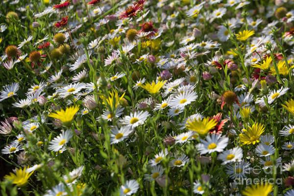 Photograph - Oklahoma Wildflowers 2 by Jim McCain