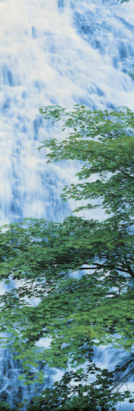 Nikko Photograph - Oku-nikko Tochigi Japan by Panoramic Images