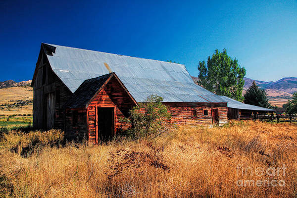 Photograph - Old Barn And Shed by Richard Lynch