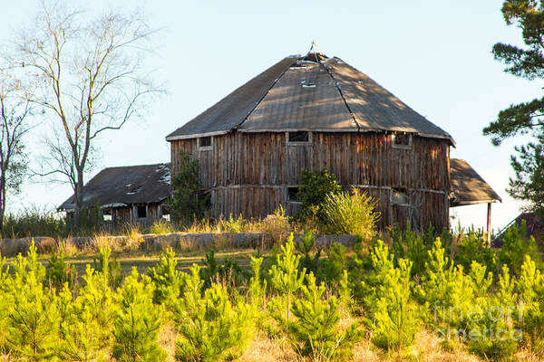 Photograph - Old Barn  by Heather Roper