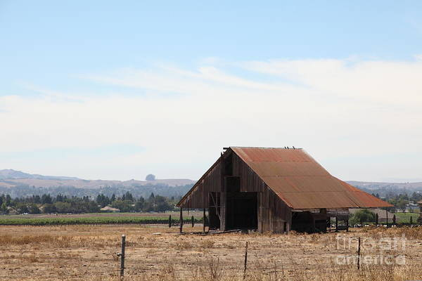Wing Back Photograph - Old Barn In Petaluma California 5d24404 by Wingsdomain Art and Photography