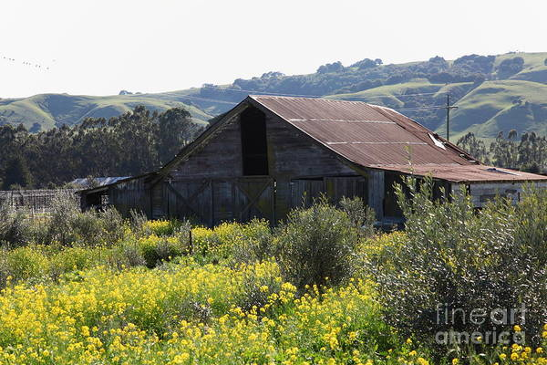Wing Back Photograph - Old Barn In Sonoma California 5d22232 by Wingsdomain Art and Photography