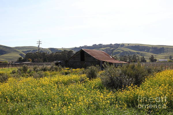 Photograph - Old Barn In Sonoma California 5d22234 by Wingsdomain Art and Photography