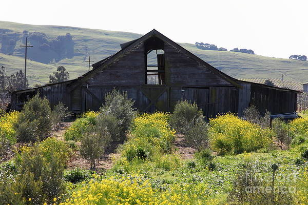 Photograph - Old Barn In Sonoma California 5d22236 by Wingsdomain Art and Photography