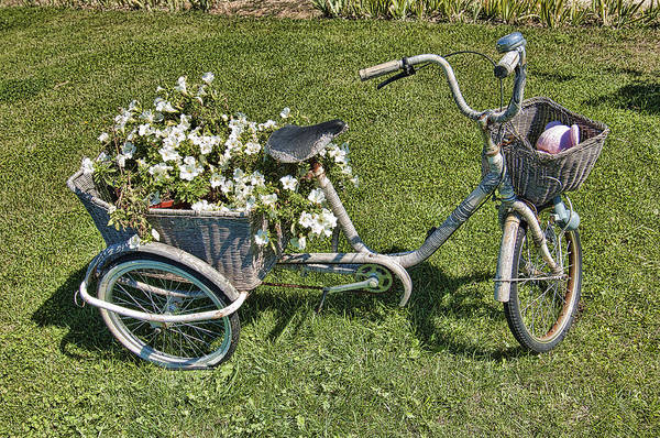 Photograph - Old Bicycle  by Mauro Celotti