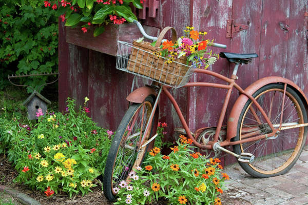 Zinnia Wall Art - Photograph - Old Bicycle With Flower Basket Next by Panoramic Images