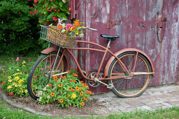 Zinnia Wall Art - Photograph - Old Bicycle With Flower Basket Next by Richard and Susan Day