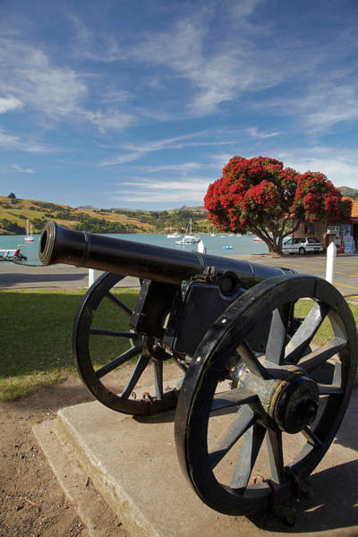 Wall Art - Photograph - Old Cannon And Pohutukawa Tree, Akaroa by David Wall