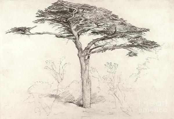 Botanical Garden Drawing - Old Cedar Tree In Botanic Garden Chelsea by Samuel Palmer