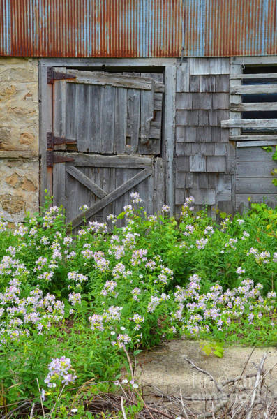 Wall Art - Photograph - Old Door And Wildflowers by Jill Battaglia