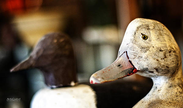 Photograph - Old Duck Decoys by Andy Crawford