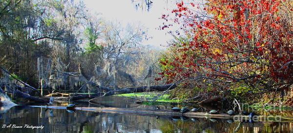 Photograph - Old Florida Along The Sante Fe River by Barbara Bowen