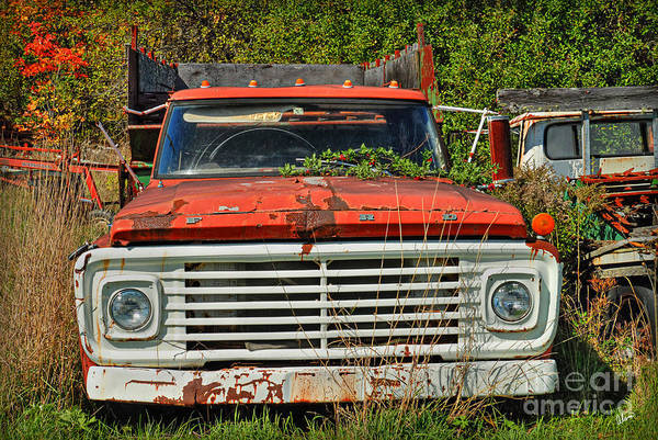 Photograph - Old Ford Truck by Alana Ranney