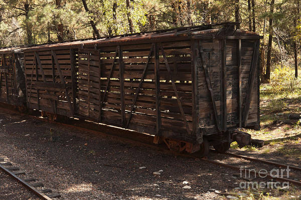 Photograph - Old Freight Cars Along The Durango And Silverton Narrow Gauge Railroad by Fred Stearns