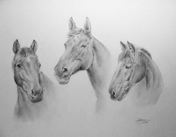 Warmbloods Drawing - Old Friends by Gill Kaye