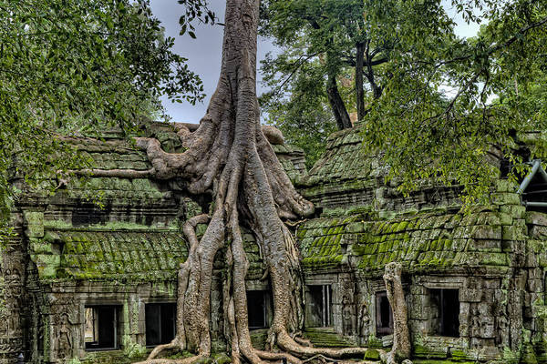 Angkor Wall Art - Photograph - Old Growth Temple by James Wheeler