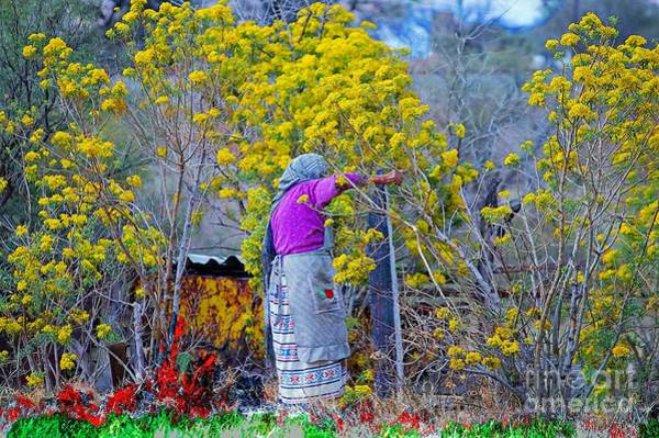 Old Mexican Woman Gathering Flowers Art Print