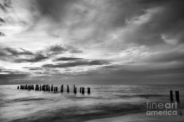 Photograph - Old Naples Pier In Black And White by Paul Quinn