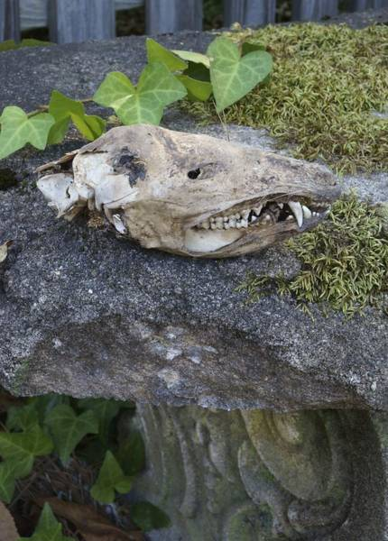 Photograph - Old Opossum Skull On The Garden Bench by MM Anderson