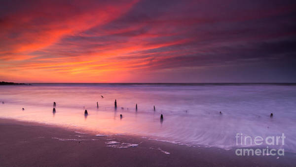 Reverse Wall Art - Photograph - Old Pilings   by Michael Ver Sprill
