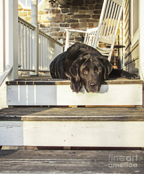 Wall Art - Photograph - Old Porch Dog by Diane Diederich