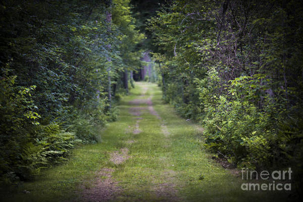 Wall Art - Photograph - Old Road Through Forest by Elena Elisseeva