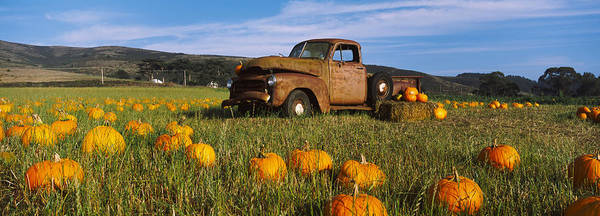 Vegetable Patch Wall Art - Photograph - Old Rusty Truck In Pumpkin Patch, Half by Panoramic Images