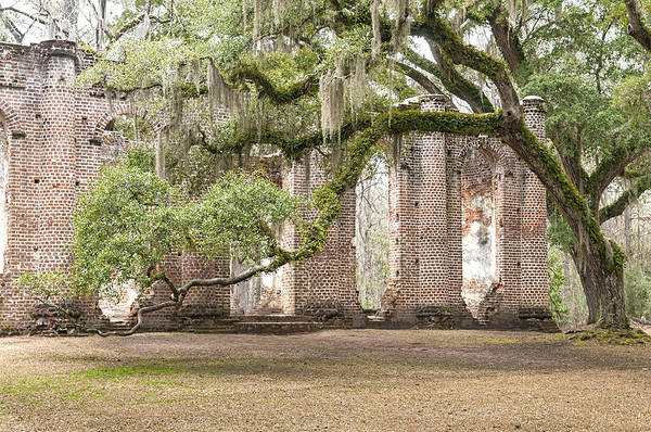 Wall Art - Photograph - Old Sheldon Church - Bent Oak by Scott Hansen
