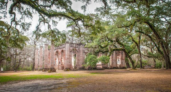 Photograph - Old Sheldon Church - Tree Canopy by Scott Hansen