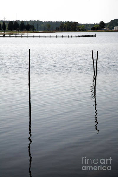 Photograph - Old Stakes In The Water by William Kuta