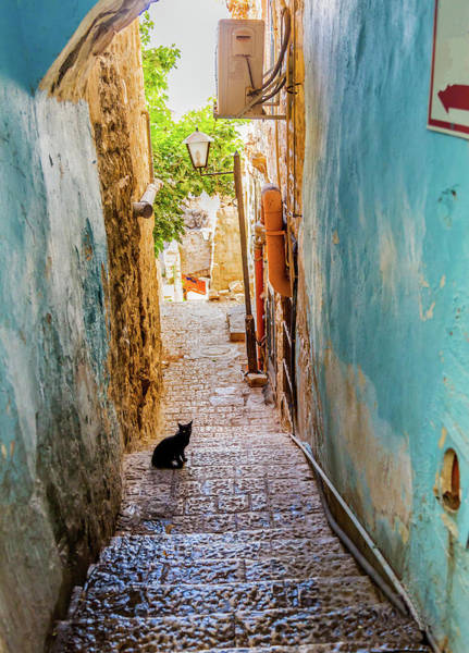 Black Cats Photograph - Old Stone Street With Black Cat, Safed by William Perry