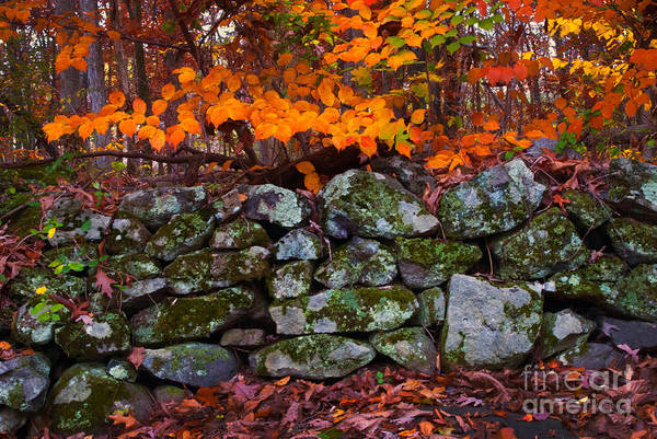 Photograph - Old Stone Wall by Paul W Faust -  Impressions of Light