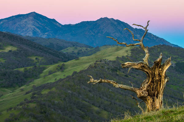 Mt. Diablo Wall Art - Photograph - Old Tree And Mt Diablo At Sunrise by Marc Crumpler