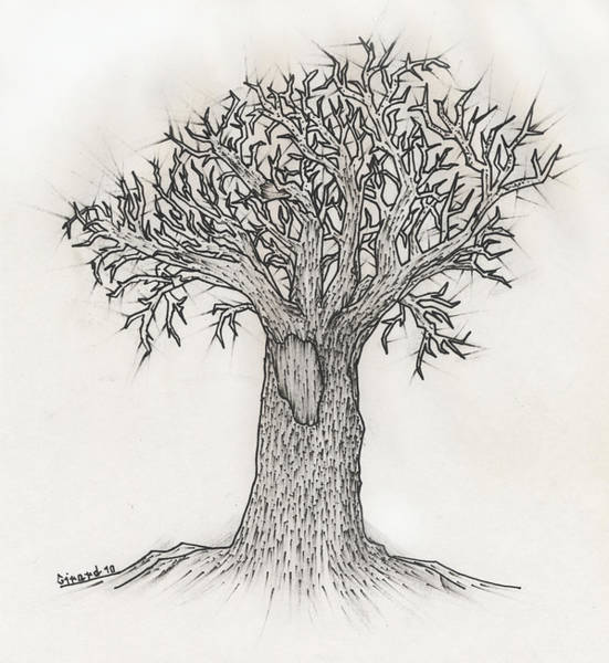 Drawing - Old Tree by Jason Girard