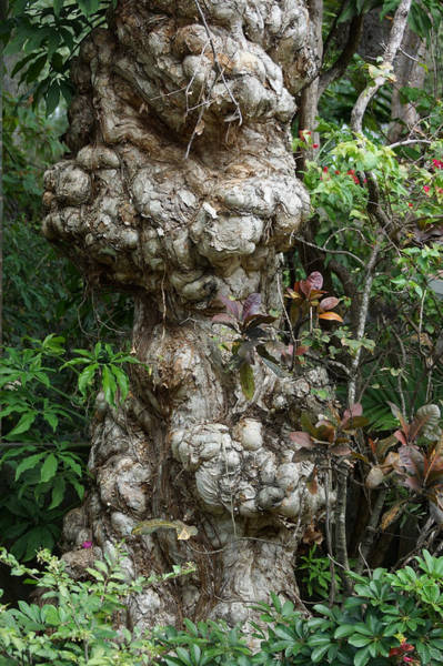 Mixed Media - Old Tree by Rafael Salazar