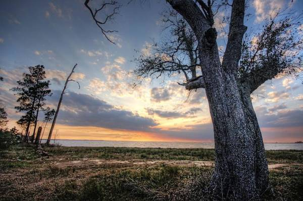 Wall Art - Digital Art - Old Tree Sunset Over Oyster Bay by Michael Thomas