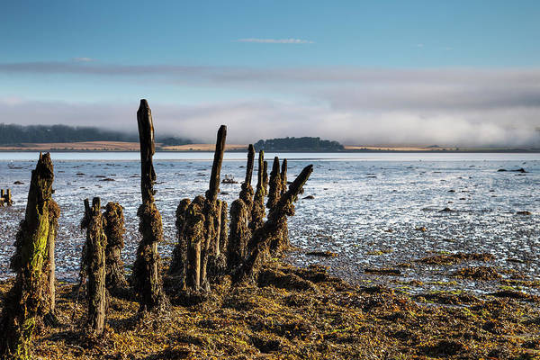 Seaweed Photograph - Old Tree Trunks Covered In Seaweed At by John Short / Design Pics
