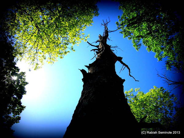 Old Trees Art Print