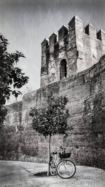 Photograph - Old Walls Orange Trees And A Bike Bw by Joan Carroll