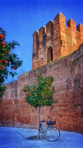 Photograph - Old Walls Orange Trees And A Bike by Joan Carroll