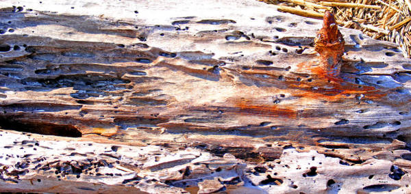Photograph - Old Weathered Log On The Sea Shore by Duane McCullough