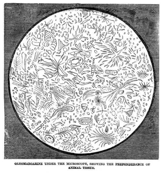 Protein Painting - Oleomargarine, 1884 by Granger