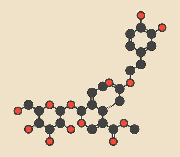 Pungent Photograph - Oleuropein Olive Component Molecule by Molekuul/science Photo Library