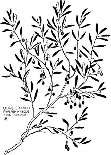 Olive Branch Drawing - Olive Branch Simplified In Decor by