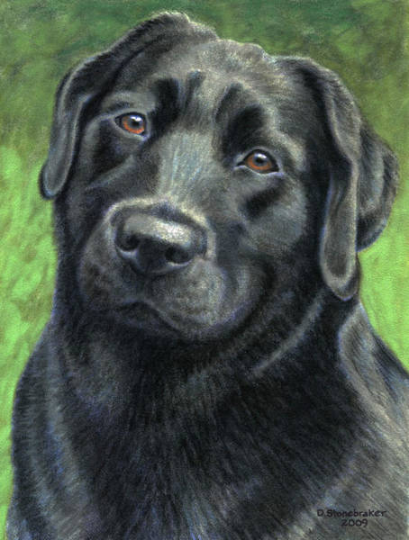Wall Art - Drawing - Olive by Debbie Stonebraker