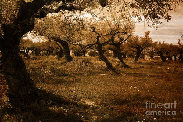 Photograph - Olive Spring by Randi Grace Nilsberg