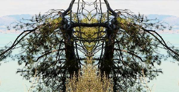 Cultivation Digital Art - Olive Tree Patterns by Dorothy Berry-Lound