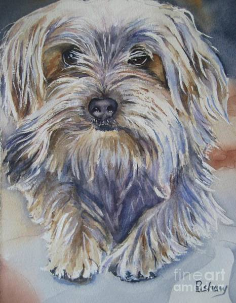 Yorkshire Terrier Painting - Ollie by Patricia Pushaw